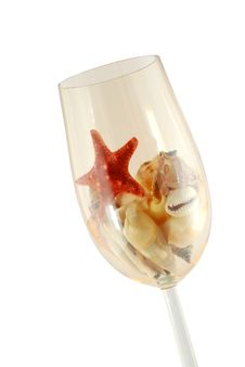 Free Shells In Glass Royalty Free Stock Photo - 6145555