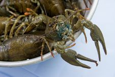 Free Crayfish Stock Photography - 6147072