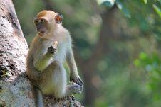 Free Monkey Eating Stock Photography - 6147302