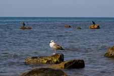 Free Triangle With Seagull And Two Cormorant Royalty Free Stock Photo - 6148275
