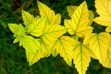 Free Yellow Leaves Stock Photos - 6149853