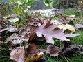 Free Autumn Stock Photo - 61414130