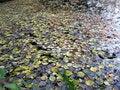 Free Autumn Royalty Free Stock Photo - 61414175