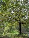 Free Autumn Oak Stock Images - 61414404