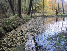 Free Autumn Stock Image - 61414131