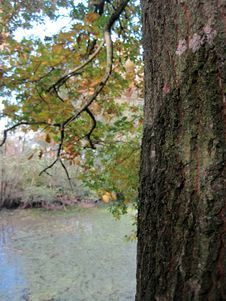 Free Autumn Oak Stock Photos - 61414153
