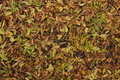 Free Autumn Leaves On The Ground Stock Photo - 61459070