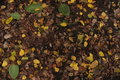 Free Autumn Leaves On The Ground Royalty Free Stock Image - 61459096