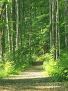 Free Trail In The Forest Stock Image - 6150871