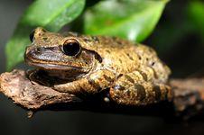 Free Frog Stock Photos - 6150833