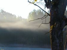 Morning Fog In The Autumn Forest Royalty Free Stock Images