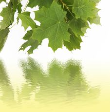 Free Water Reflection Of Green Leaves Stock Photos - 6151693