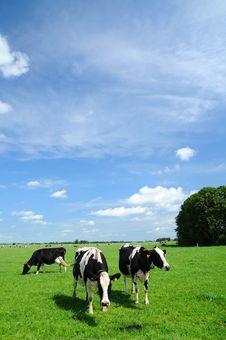 Free Meadow Stock Photo - 6152220