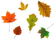 Free Full-size Composite Photo Of Various Autumn Leaves Stock Photos - 6152543