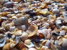 Free Shells. Stock Image - 6152691