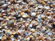 Free Shells. Stock Photography - 6152692
