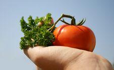 Free Gardener Vegetables Royalty Free Stock Photo - 6152735