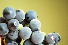 Free Grapes Stock Photography - 6152832
