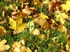 Free Fall Of The Leaves Stock Image - 6153231