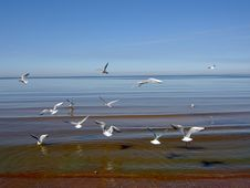 Free Seagulls Over The Sea. Stock Image - 6153621