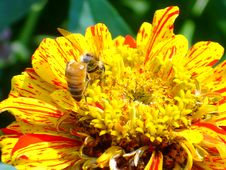 Free Flower With A Bee Stock Photos - 6153683