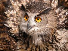 Free Eagle Owl (Bubo Bubo) Stock Photos - 6154473