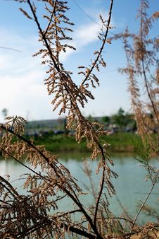 Free Tree Detail With Pond On The  Background Stock Images - 6155234