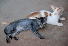 Free Cats Stock Photos - 6155683