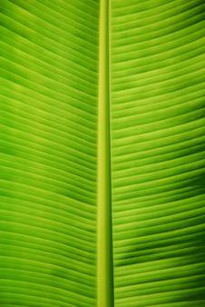 Free Banana Leaf Stock Photos - 6155783