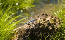 Free Blue Dragonfly Royalty Free Stock Photography - 6156157