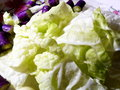 Free Sliced Chinese Cabbages Royalty Free Stock Photography - 61516627