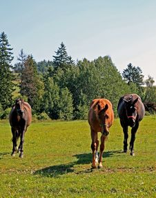 Free Horses Royalty Free Stock Image - 6160716