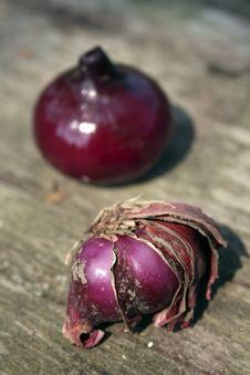 Free Damaged And Healthy Onions Stock Images - 6162094