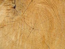 Free Tree Royalty Free Stock Photo - 6163035