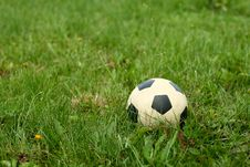 Free Ball On Green Grass Stock Images - 6164444
