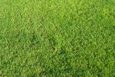 Free Green Grass Field Stock Photography - 6164722