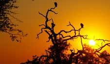 Free Vultures At Sunset Royalty Free Stock Photos - 6165038