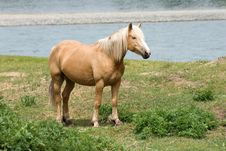 Free Horse About River Royalty Free Stock Image - 6165676