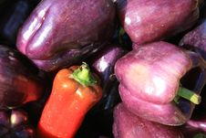 Purple And Red Peppers Stock Photography