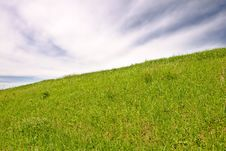 Free Green Grass Field Stock Photo - 6166080
