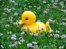Free The Toy Duckling Royalty Free Stock Image - 6166256