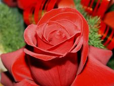 Free Rose Stock Image - 6166751