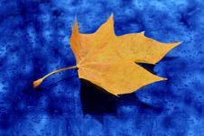 Free Alone Leaf Stock Photography - 6166762