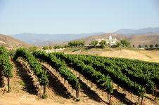 Free Vineyard Stock Images - 6167294