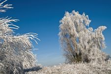 Free Icy Tree Stock Photos - 6167683