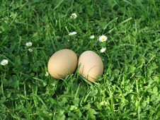 Free Eggs Stock Photo - 6167780