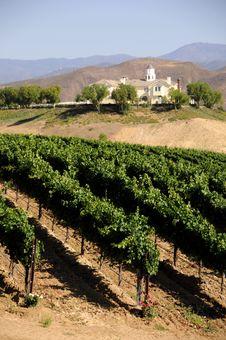 Free Vineyard Royalty Free Stock Photos - 6168078