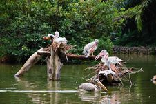Free Yellow Billed Stork Stock Photography - 6168972