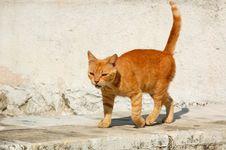 Free Grumpy Cat Stock Photos - 6169123
