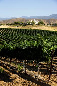 Free Vineyard Royalty Free Stock Photo - 6169485
